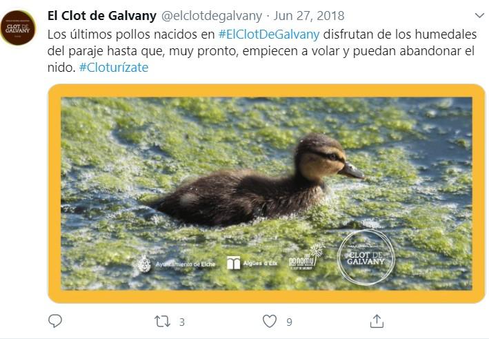 Clot De Galvany Twitter